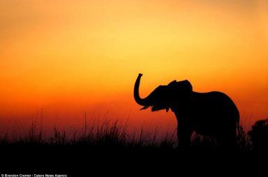 elephant silhouette - arunace
