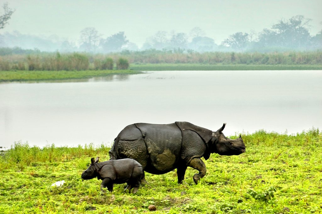 kaziranga-national-park-rhino-arunace